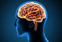 Human Brain - Function and Facts